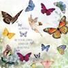 Flutter-by-Lightly