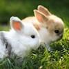 Rabbit81