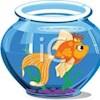 DeeFish71