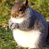 FattySquirrel